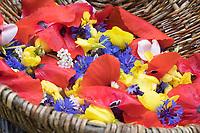 Essbare Blüten in einem Korb, Kräuterernte, Blütenblätter, Blütenernte, Blüten. Kornblume, Korn-Blume, Zyane, Cyanus segetum, Centaurea cyanus, Cornflower, Bachelor´s Button, Le Bleuet, le Centaurée bleuet. Nachtkerze, Nachtkerzen-Blüten, Gewöhnliche Nachtkerze, Oenothera biennis, Common Evening Primrose, Evening-Primrose, Onagre. Klatsch-Mohn, Klatschmohn, Mohnblume, Klatschrose, Mohn, Papaver rhoeas, Corn Poppy, Field Poppy, common poppy, corn rose, Flanders poppy, red poppy, Le coquelicot. Gänseblümchen, Bellis perennis, English Daisy, common daisy, lawn daisy, la Pâquerette, la pâquerette vivace. Schafgarbe, Gewöhnliche Schafgarbe, Wiesen-Schafgarbe, Schafgabe, Achillea millefolium, yarrow, Common Yarrow, Achillée millefeuille, la Millefeuille