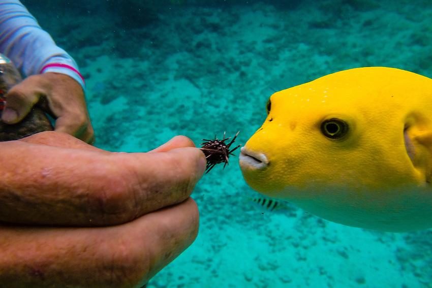 A marine biologist feeds a fish underwater in a lagoon at the Four Seasons Resort Bora Bora, French Polynesia.