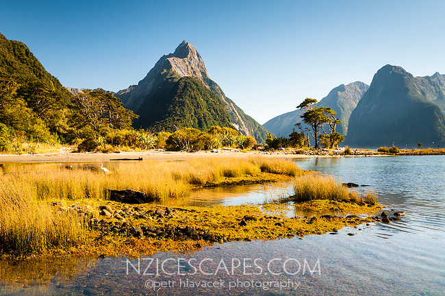Milford Sound with Mitre Peak 1692m, Fiordland NP, Southland, World Heritage Area, New Zealand