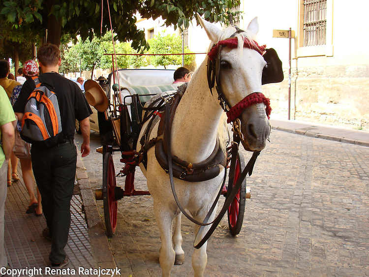 Cab pulling horse waiting for tourists in Cordoba, Andalusia, Spain.