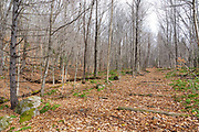 Location of Camp 15 along the old East Branch & Lincoln Railroad (1893-1948) in the Pemigewasset Wilderness of Lincoln, New Hampshire USA. On the left was the landing and work area.