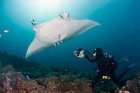 Thomas Peschak photographs reef manta rays, Manta alfredi, at cleaning station, Manta Point, Lankan, North Male Atoll, Maldives, Indian Ocean