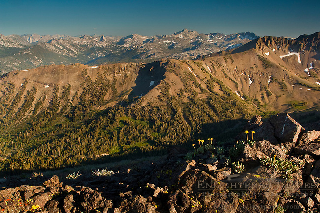 Overlooking mountain peaks of the High Sierra from Leavitt Pass, Emigrant Wilderness, California