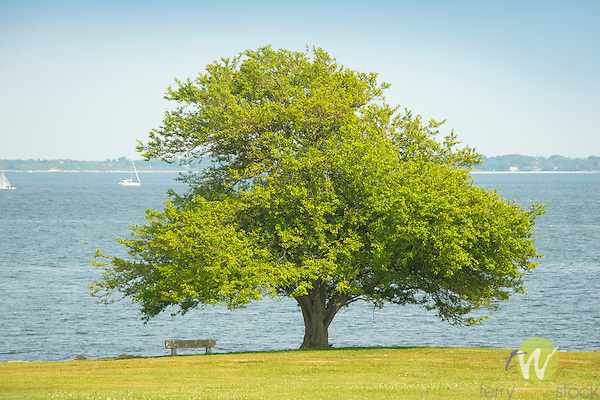 Harkness Memorial State Park.  Tree and bench along Goshen Point.