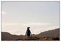 Afrique du Sud<br /> Cap de Bonne Esp&eacute;rance<br /> Manchot