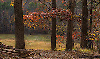 Landscape Scenic, photograph, of the colourful fall leaves, and the deer grazing in the open meadows of Kennesaw Mountain, which was the site of the 1864 Atlanta Campaign of the American Civil War.