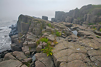 Basalt rock in fog along the Bay of Fundy<br />
