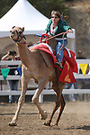 Kristy Bond rides in the International Camel Races in Virginia City, Nev., on Friday, Sept. 9, 2011. .Photo by Cathleen Allison