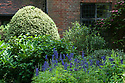 Clipped variegated box, Hydrangea and Aconitum, with Actinidia kolomikta trained on the wall, Old Garden, Vann House, Surrey, mid June.
