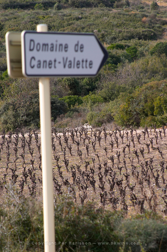 Domaine de Canet-Valette Cessenon-sur-Orb St Chinian. Languedoc. France. Europe. Vineyard.