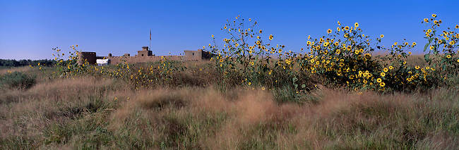 Sunflowers grow along plains in front of Bent's Old Fort Nat'l Historic Site, Santa Fe Trail, near La Junta, CO