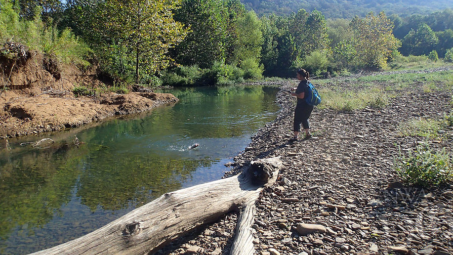 NWA Democrat-Gazette/FLIP PUTTHOFF<br />Roark lands a smallmouth bass Sept. 22 2017 while wade-fishing the Middle Fork of the White River.