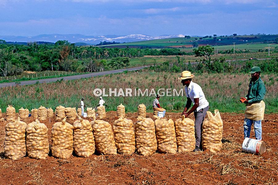 Colheita de batata no municipio de Três Corações em Minas Gerais. 1996. Foto de Juca Martins.