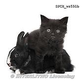 Xavier, ANIMALS, REALISTISCHE TIERE, ANIMALES REALISTICOS, FONDLESS, photos+++++,SPCHWS591B,#A#