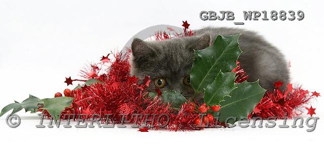 Kim, CHRISTMAS ANIMALS, photos, GBJBWP18839,#XA# stickers