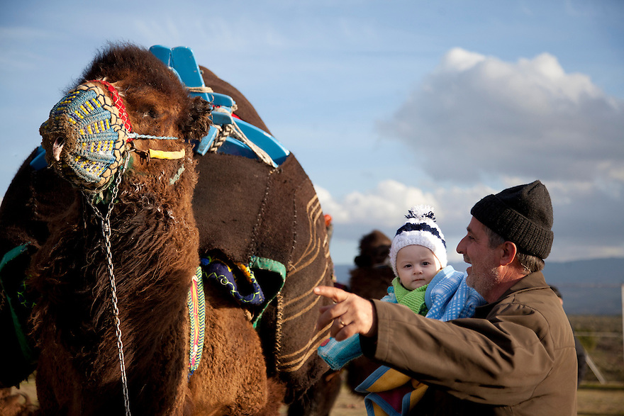 Pelitkoy, Turkey--A man shows his granddaughter one of the camels participating in the Pelitkoy camel wrestling tournament. About a hundred camels compete each weekend, though no winner is declared. PHOTO BY JODI HILTON