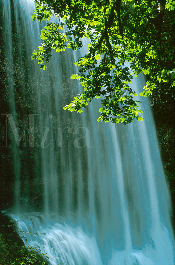 Water tumbles onto rocks under a canopy of green leaves. waterfall, waterfalls. Oregon, Silver Falls State Park.