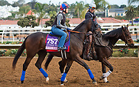 DEL MAR, CA - OCTOBER 02: Maya Malibu, owned by My Meadowview LLC and trained by H. Graham Motion, exercises in preparation for the 14 Hands Winery Breeders' Cup Juvenile Fillies at Del Mar Thoroughbred Club on November 2, 2017 in Del Mar, California. (Photo by Anna Purdy/Eclipse Sportswire/Breeders Cup)