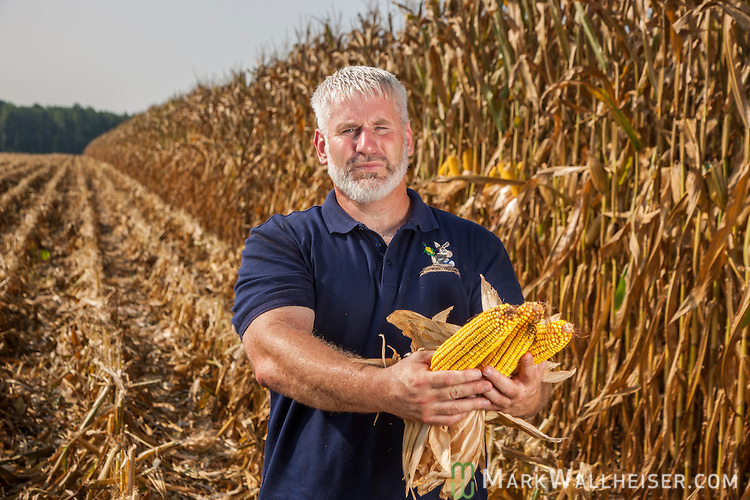Randy Dowdy inspects his corn crop before starting the day's harvest near Valdosta, Ga August 6, 2014.