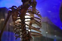 A human skeleton displayed at the Nairobi National Musuem