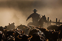 3rd Place 2015 Best Freelance Editorial Photograph - Western Horseman<br />