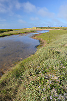 Saltmarsh at Holme Nature Reserve, Norfolk