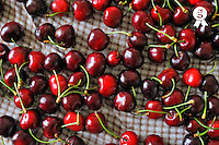 Cherries on table (Licence this image exclusively with Getty: http://www.gettyimages.com/detail/82406654 )