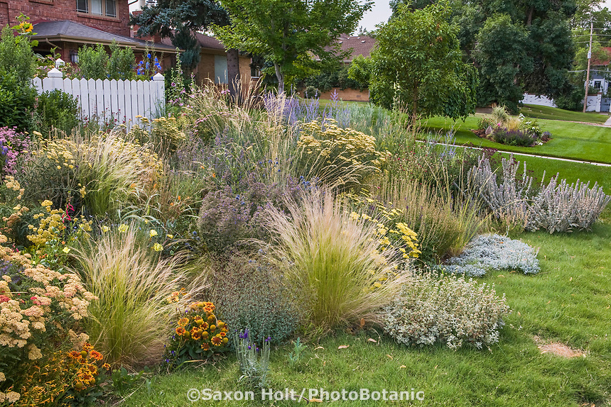 Xeriscape front yard cottage meadow perennial garden with grasses Stipa tenuissima (ctr), drought tolerant  Buffalo Grass lawn, Yarrow, Gaillardia and Nepeta 'Walker's Low'.  Design by Tom Peace