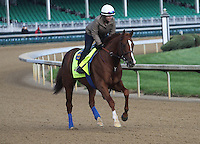 May 1, 2014: Chitu gallops in preparation for the Kentucky Derby at Churchill Downs in Louisville, KY. Zoe Metz/ESW/CSM