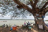 Cambodge, Cambodia, Banian tree
