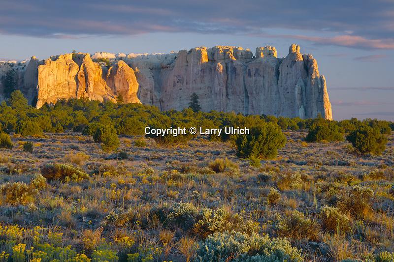 Uintah groundsel<br /> El Morro<br /> El Morro National Monument<br /> Colorado Plateau,  New Mexico