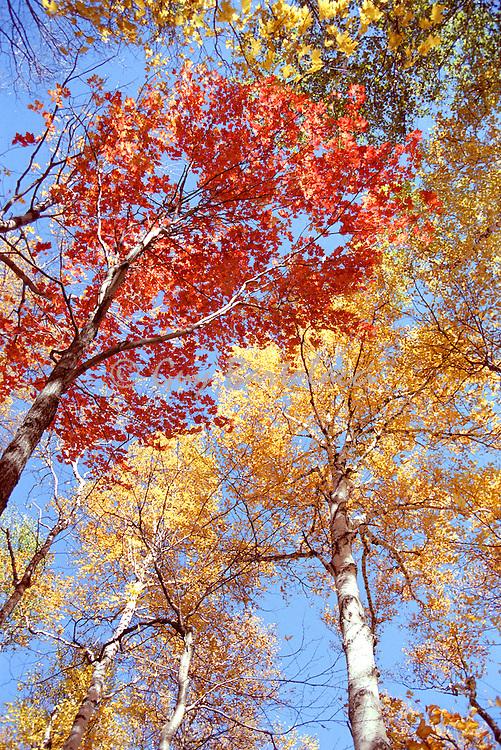 Foliage in Bartlett