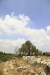 Israel, Shephelah, Hurvat Shiklon in Masua forest