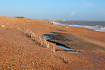 Mysterious lines wooden stakes exposed by fall in beach level possibly historic coastal defences, Bawdsey, Suffolk, England
