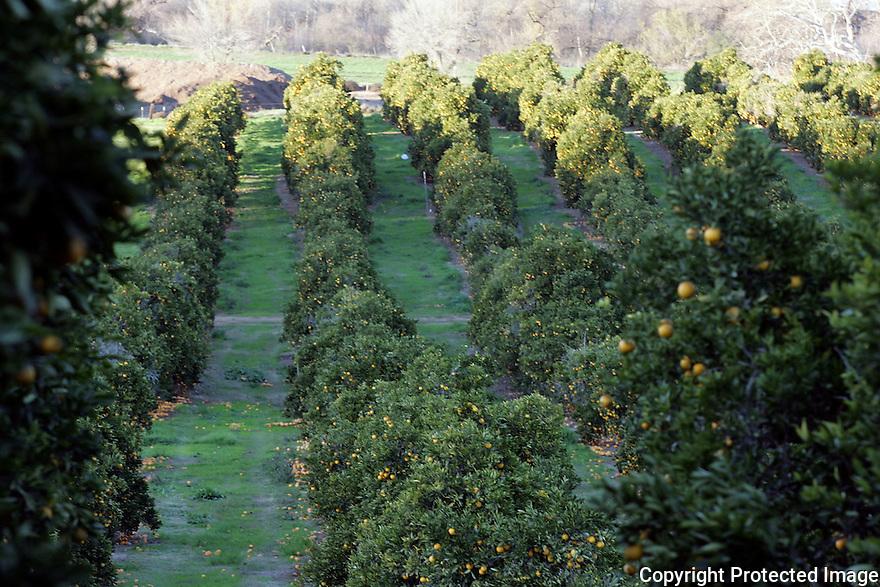 Rainbow Valley Orchards, California.