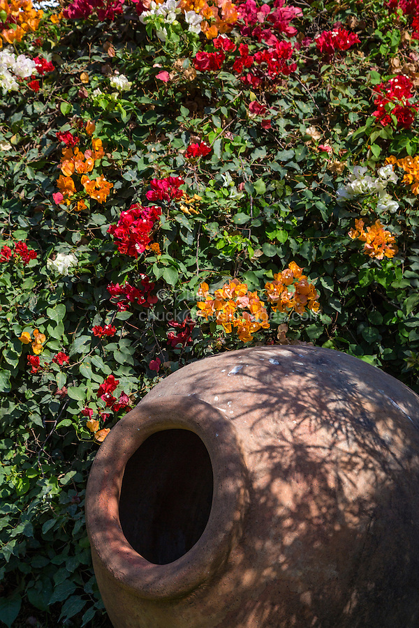 Lima, Peru.  Bougainvillea and Large Peruvian Pot, Gardens of the Larco Museum (Museo Larco).