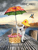 PAUL,REALISTIC ANIMALS, REALISTISCHE TIERE, ANIMALES REALISTICOS, paintings+++++NW_Umbrella-Dog-I,USLGNW21,#a#, EVERYDAY ,funny photos