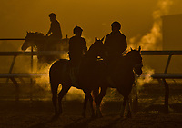 ELMONT, NY - JUNE 09: Horses exercises during morning workouts in preparation for the Belmont Stakes at Belmont Park on June 9, 2017 in Elmont, New York (Photo by Scott Serio/Eclipse Sportswire/Getty Images)