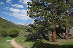 distant peaks, ponderosa pine, Rocky Mountains, landscape, Cub Lake Trail, Rocky Mountain National Park, spring, June, Colorado, USA.