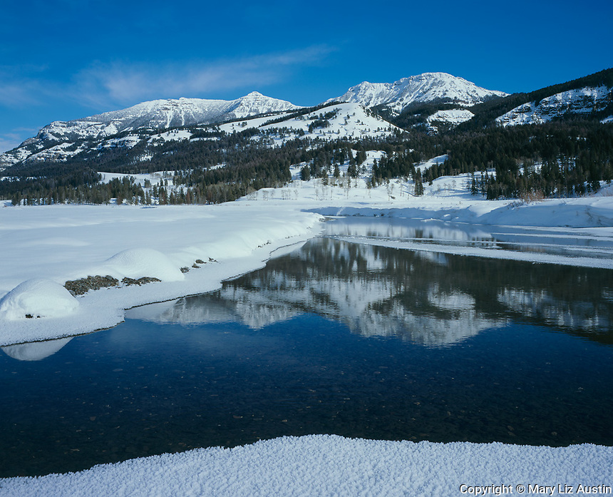 Yellowstone National Park, WY <br /> Calm waters of Soda Butte Creek reflecting Mount Norris and the Thunderer in winter