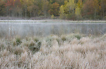 Waterloo Pond morning frost