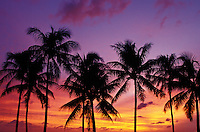 Silouetted palms at sunset, Waikiki
