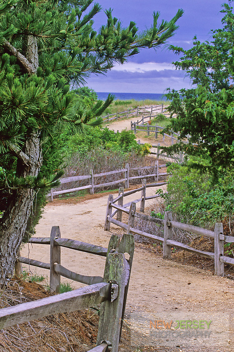 Winding Path through Coastal Sand Dunes.  Avalon, New Jersey