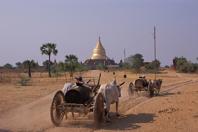 MYANMAR(BURMA), PAGAN, BURMESE PEOPLE ON OX CARTS ON THE WAY TO IRRAWADY RIVER TO GET WATER