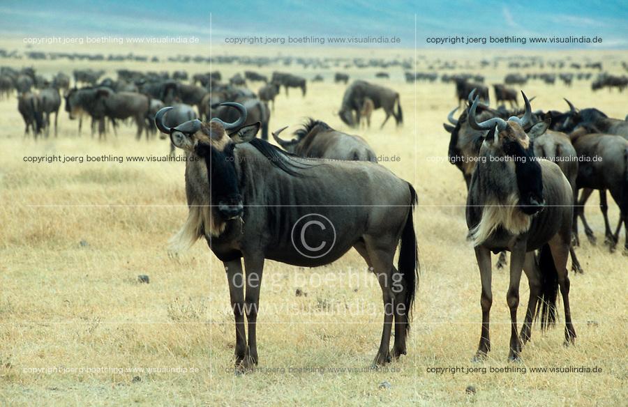 TANZANIA Nationalpark, Ngorongoro Crater, wildebeest / TANSANIA Nationalpark Ngorongoro Crater , Gnu