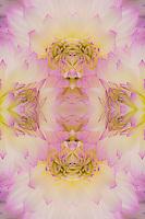 Flipped pattern, Dahlia Flowers, Birmingham, AL