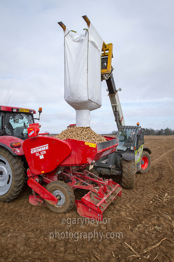 Loading potato planter with seed - Suffolk