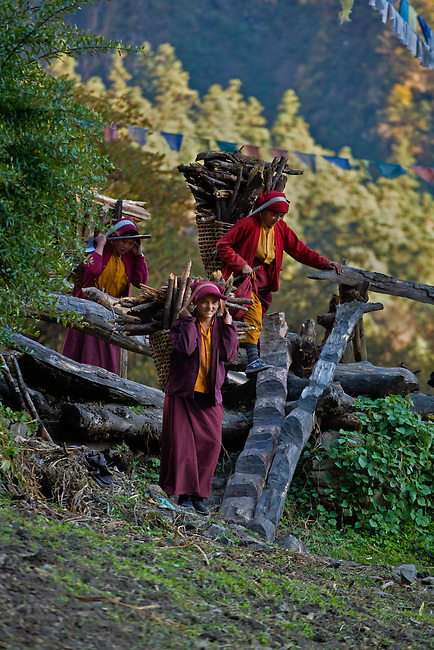 NUNS haul firewood in DOLKO baskets in preperation for winter at a remote TIBETAN BUDDHIST MONASTERY - NEPAL HIMALAYA
