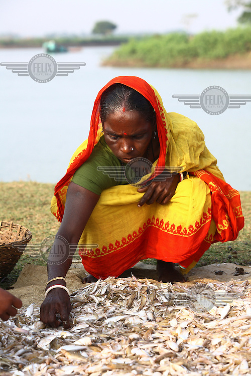 A woman sorts fish by a river in Gajaria. She received a microfinance loan from IFAD (International Fund for Agricultural Development).