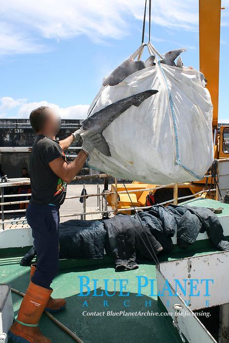 Spanish shark fishing vessel unloading blue shark fins; Horta; Faial; Azores; Portugal Europe; Northern Atlantic; blue shark; Prionace glauca; Mako shark; Isurus oxyrinchus;